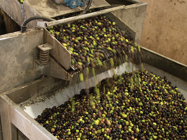 The by-product of olive oil production—the mash and pits were historically dumped into landfills in Syria.